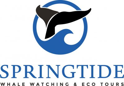 SpringTide Whale Watching and Eco Tours